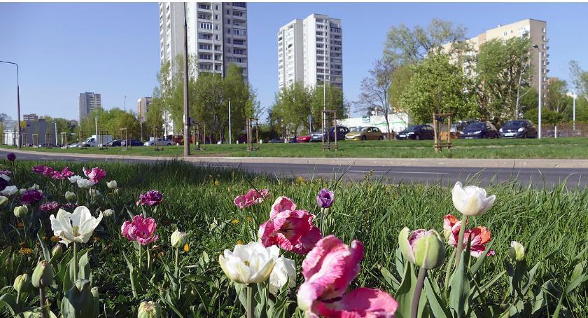 Żoliborz w obiektywie , Wiosna Potoku - zdjęcie, fotografia