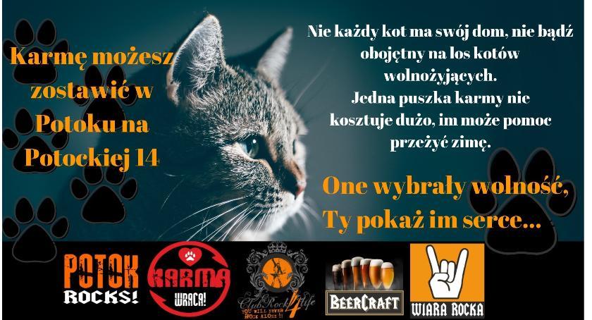 zwierzęta, Kotom życzymy smacznego! - zdjęcie, fotografia