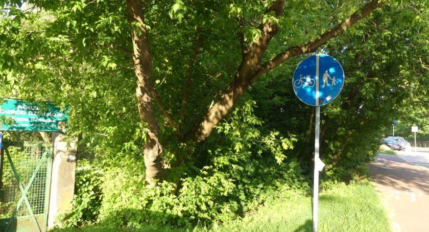 zieleń, Niebezpieczne drzewo Gwiaździstej - zdjęcie, fotografia