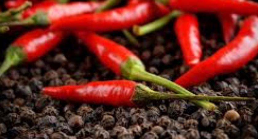 kuchnia Informatora, Magia przypraw chili - zdjęcie, fotografia