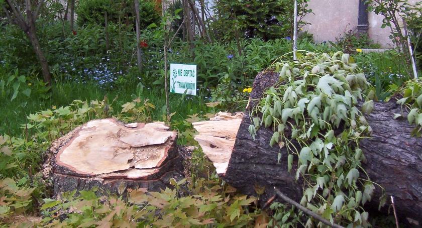 zieleń, będzie pozwalał wycinanie żoliborskich drzew - zdjęcie, fotografia