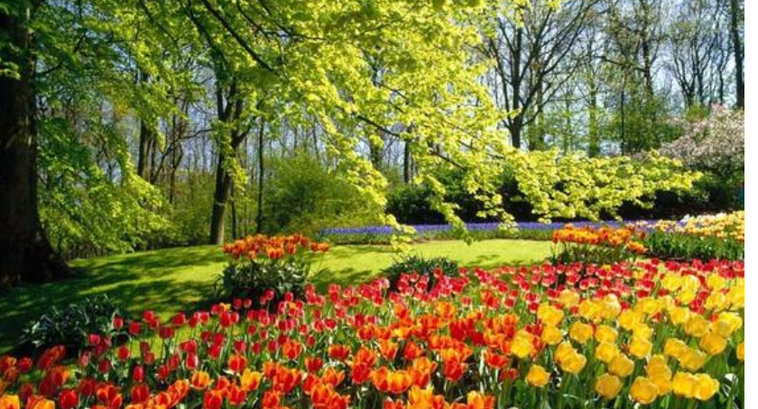 zieleń, Warszawa kwiatach zieleni - zdjęcie, fotografia