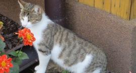 Koteczka szuka domu