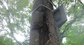 Nie tylko drzewa umierają stojąc...