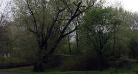 Instytut Ochrony Środowiska kontra konserwatywny Żoliborz