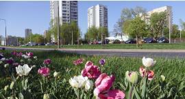 Wiosna na Potoku