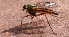 Niespotykana inwazja komarów na Marymoncie i nie tylko
