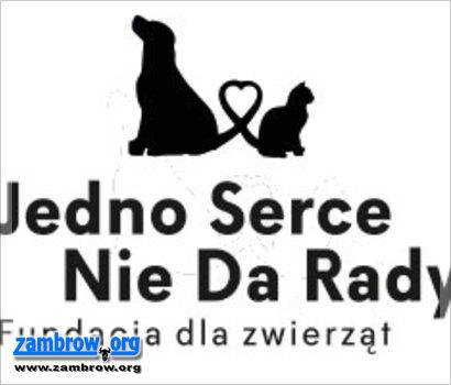 społeczeństwo, dzień pomagają zwierzętom Teraz potrzebują pomocy! - zdjęcie, fotografia
