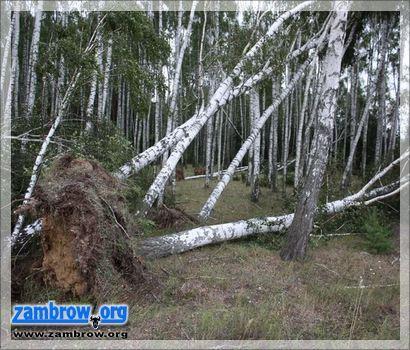 meteo, Synoptycy ostrzegają przed silnym wiatrem - zdjęcie, fotografia