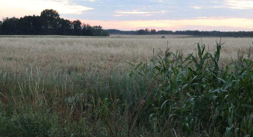 rolnictwo, Wyższe dopłaty rolników - zdjęcie, fotografia