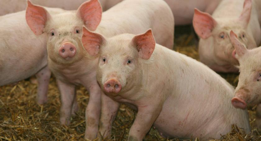 rolnictwo, wtorku można jeszcze składać wnioski pomoc związku - zdjęcie, fotografia