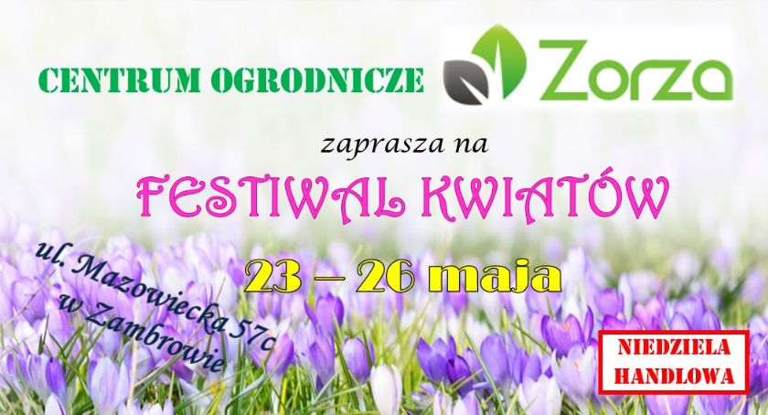 artykuł sponsorowany, Rozpoczyna Festiwal Kwiatów Zambrowie! - zdjęcie, fotografia