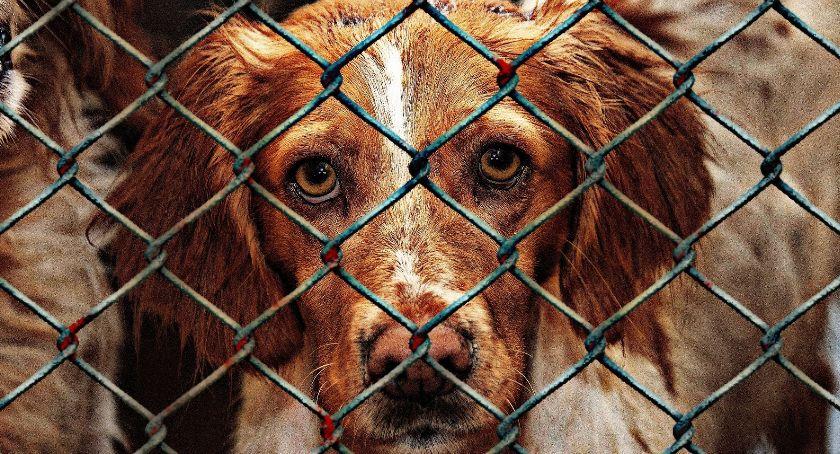 interwencje, Pieski bezdomnych zwierząt - zdjęcie, fotografia