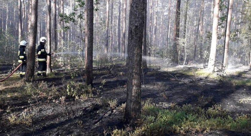 pożary i straż, Rośnie zagrożenie pożarowe lasach Prosimy rozwagę - zdjęcie, fotografia