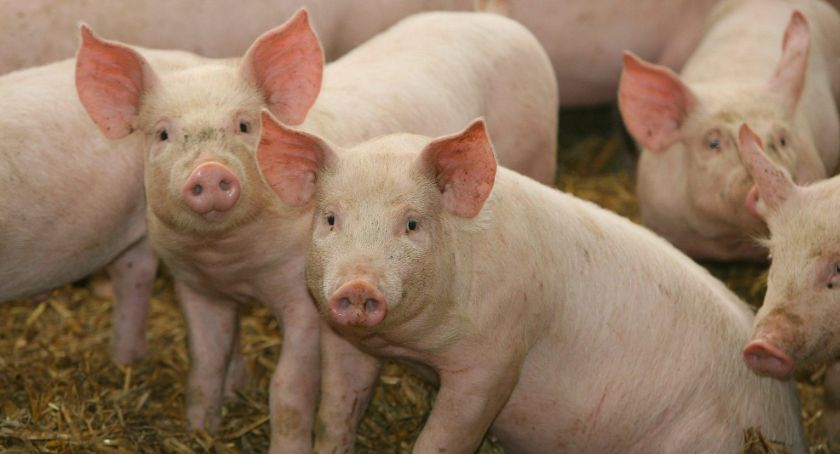 rolnictwo, Premie rozpoczęcie pozarolniczej działalności gospodarczej - zdjęcie, fotografia