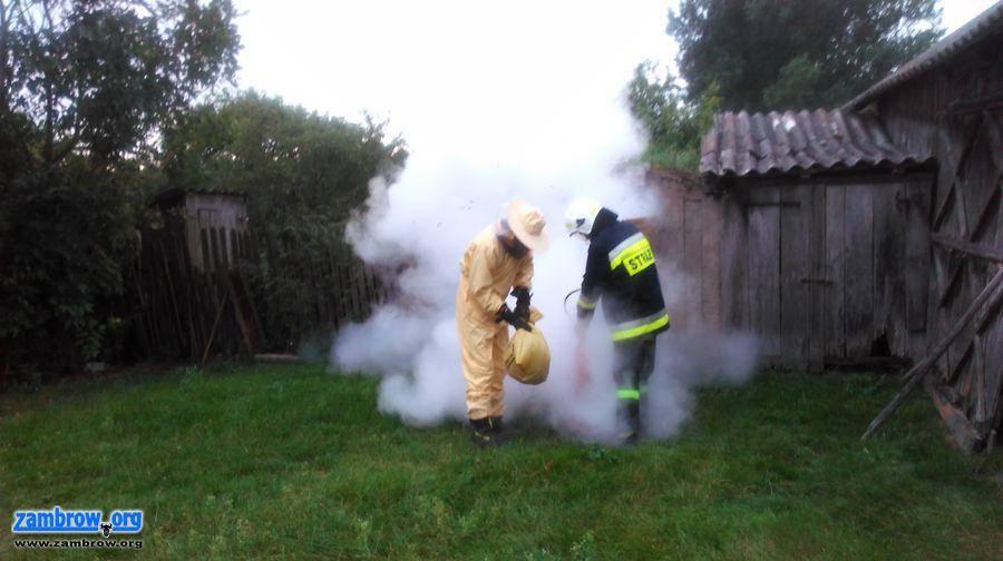 straż, Strażacy Szumowa usuwali gniazdo szerszeni [foto] - zdjęcie, fotografia