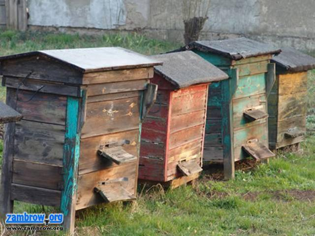 osoby poszukiwane, Zambrowska policja poszukuje złodzieja pszczół - zdjęcie, fotografia