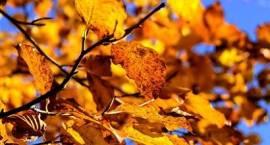 Pierwszy dzień astronomicznej jesieni