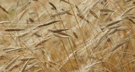 Przekaż gospodarstwo innemu rolnikowi i weź pieniądze z PROW