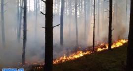 Ponad dwa razy więcej pożarów lasów niż przed rokiem