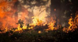 Zagrożenie pożarowe w lasach. Także w województwie podlaskim