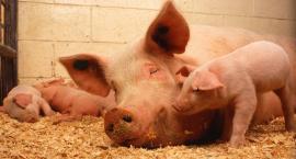 Zmieniły się zasady dotyczące identyfikacji i rejestracji zwierząt gospodarskich