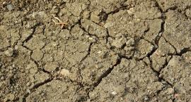 Termin naboru wniosków o pomoc klęskową dla rolników wydłużony