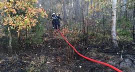 Znowu palił się las nieopodal Skarżyna [foto+video]