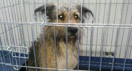 Pies topił się w Jabłonce. Zwierzę czeka na właściciela w lecznicy