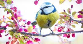 Pierwszy dzień wiosny. Żegnamy zimę!