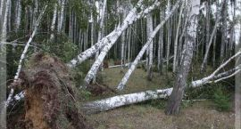 Synoptycy ostrzegają przed silnym wiatrem