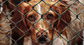 Pieski los bezdomnych zwierząt