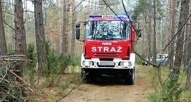 Rozpalili ognisko w kompleksie leśnym w Czerwonym Borze [foto]