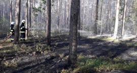 Rośnie zagrożenie pożarowe w lasach. Prosimy o rozwagę