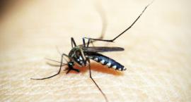 Komary w Polsce a ryzyko zdrowotne - informacja Głównego Inspektora Sanitarnego