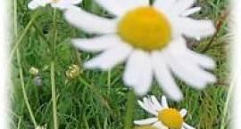 Z kwiatami do mamy