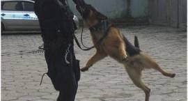 Dobór czworonogów do służby w policji