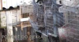 """O fermie zwierząt futerkowych spod Zambrowa w """"Magazynie Ekspresu Reporterów"""""""