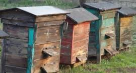 Zambrowska policja poszukuje złodzieja ... pszczół