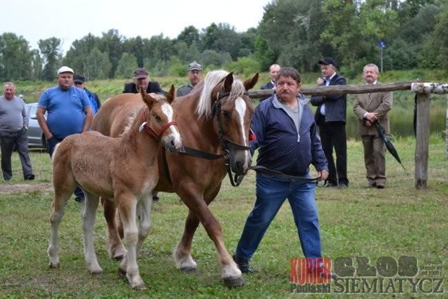 VII Wystawa koni w Drohiczynie
