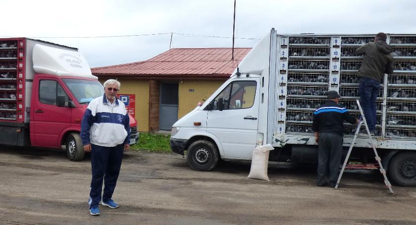 Ludzie  - pasje i problemy, Hodowcy gołębi Rumunii Siemiatyczach - zdjęcie, fotografia