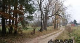 Ciechanowczyk - miasto czy wieś