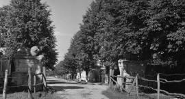 Na starej fotografii -  Oryginalne resztki pałacowych sfinksów