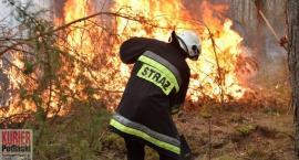 Bezmyślność przyczyną pożaru lasu
