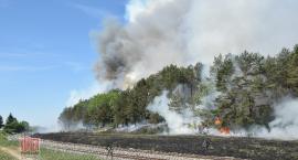 Pożar traw i lasu wzdłuż linii kolejowej