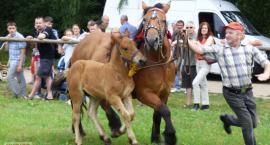 X Wystawa Koni w Drohiczynie