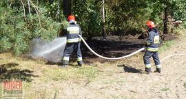 Pożar lasu w Romanówce
