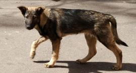 Psy bezpańskie czy porzucone?