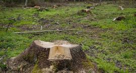 Walczcie o drzewa