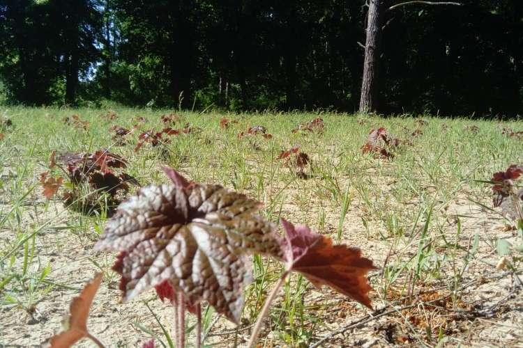 Samorządowcy, tropie żurawki purpurowej - zdjęcie, fotografia